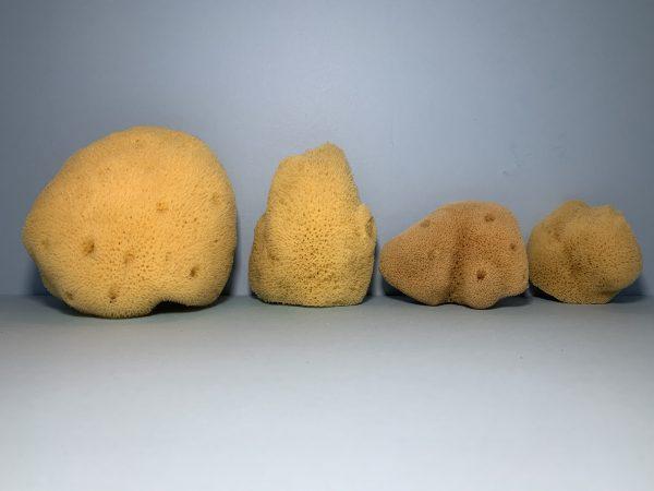 Pacific Silk Sponges